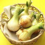新玉ねぎの保存方法(新聞紙・つるし・冷凍)を知っておいしく食べる方法