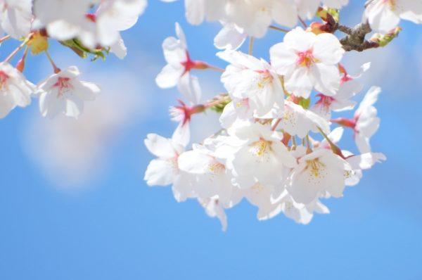 大仙公園のお花見が子連れにオススメな5つの理由とは