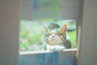 旅猫リポートがついに映画化!主役の猫『ナナ』を大予想
