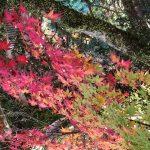 牛滝山(大威徳寺)の紅葉はアクセスが良くてオススメ!